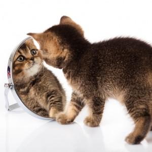 Spiegel der Seele